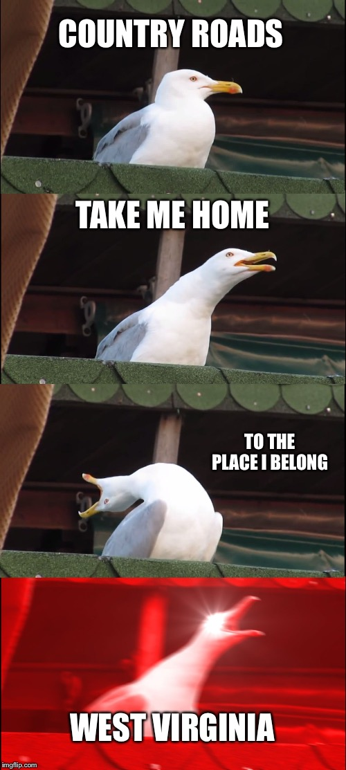 Mountain mama, take me home, country roads. |  COUNTRY ROADS; TAKE ME HOME; TO THE PLACE I BELONG; WEST VIRGINIA | image tagged in memes,inhaling seagull,john denver,west virginia | made w/ Imgflip meme maker