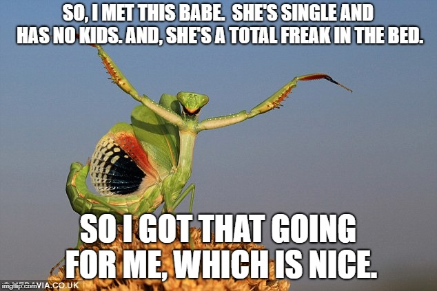 One night stand takes on a whole different meaning in the mantis world. | SO, I MET THIS BABE.  SHE'S SINGLE AND HAS NO KIDS. AND, SHE'S A TOTAL FREAK IN THE BED. SO I GOT THAT GOING FOR ME, WHICH IS NICE. | image tagged in funny memes,so i got that goin for me which is nice | made w/ Imgflip meme maker