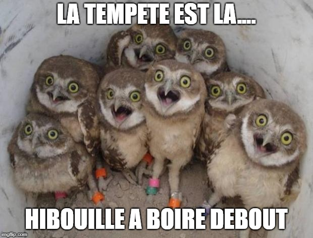 hobou | LA TEMPETE EST LA.... HIBOUILLE A BOIRE DEBOUT | image tagged in excited owls | made w/ Imgflip meme maker