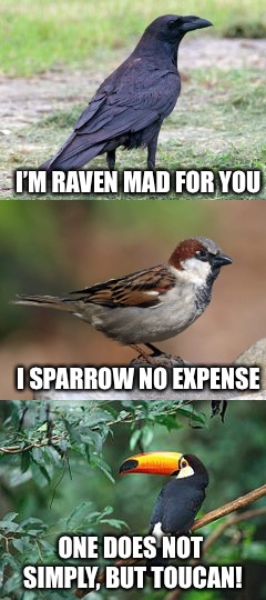 Owlgebra | I'M RAVEN MAD FOR YOU I SPARROW NO EXPENSE ONE DOES NOT SIMPLY, BUT TOUCAN! | image tagged in memes,birds,puns | made w/ Imgflip meme maker