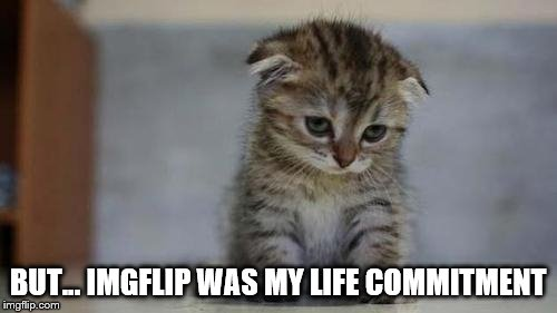 Sad kitten | BUT... IMGFLIP WAS MY LIFE COMMITMENT | image tagged in sad kitten | made w/ Imgflip meme maker