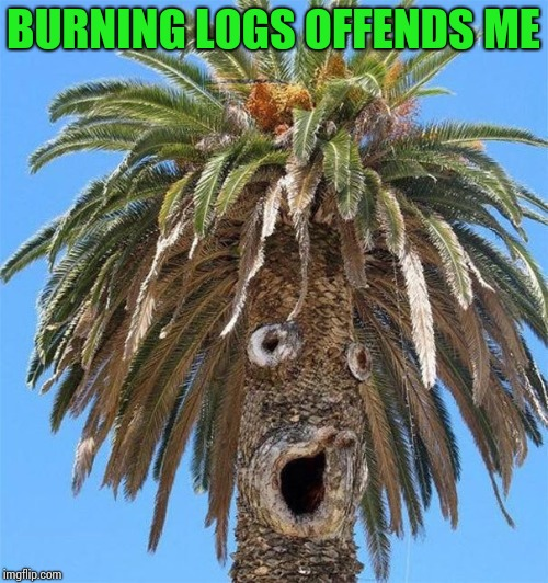BURNING LOGS OFFENDS ME | made w/ Imgflip meme maker