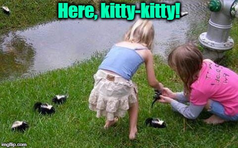 Mommy, can we keep them? | Here, kitty-kitty! | image tagged in funny memes,kids,skunk,baby animals,don't get triggered by the hyphen | made w/ Imgflip meme maker