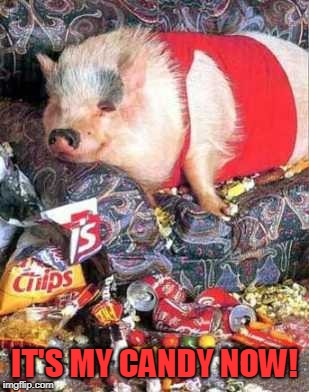 pig | IT'S MY CANDY NOW! | image tagged in pig | made w/ Imgflip meme maker