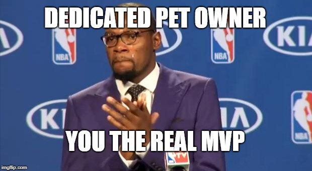 You The Real MVP Meme | DEDICATED PET OWNER YOU THE REAL MVP | image tagged in memes,you the real mvp | made w/ Imgflip meme maker