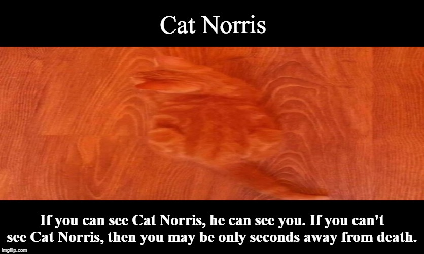 Beware!  | Cat Norris If you can see Cat Norris, he can see you. If you can't see Cat Norris, then you may be only seconds away from death. | image tagged in cat norris,chuck norris,chuck norris fact,memes,funny memes | made w/ Imgflip meme maker