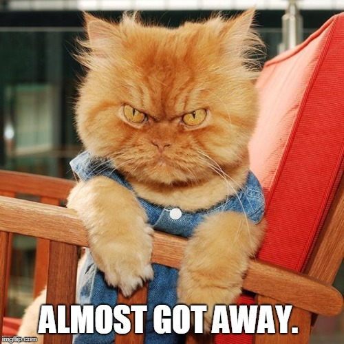 Garfi The Angry Cat | ALMOST GOT AWAY. | image tagged in garfi the angry cat | made w/ Imgflip meme maker