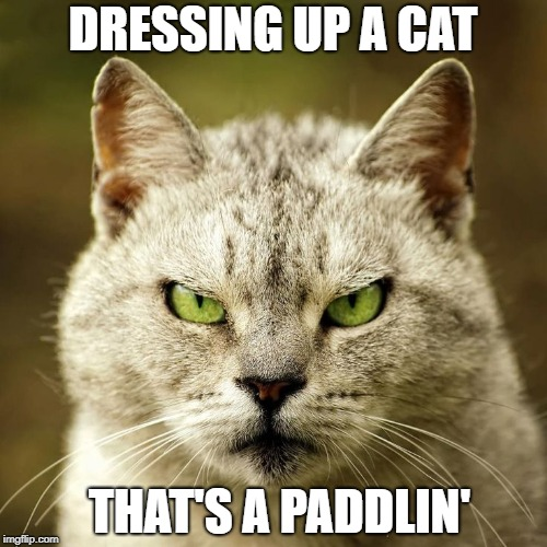 DRESSING UP A CAT THAT'S A PADDLIN' | made w/ Imgflip meme maker