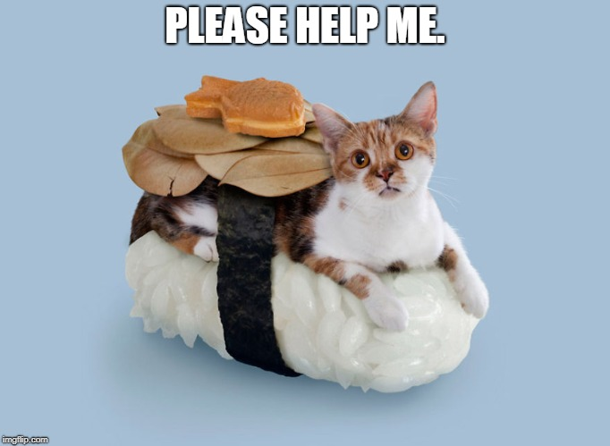 cats | PLEASE HELP ME. | image tagged in cats | made w/ Imgflip meme maker