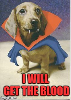 vampire dachshund | I WILL GET THE BLOOD | image tagged in vampire dachshund | made w/ Imgflip meme maker