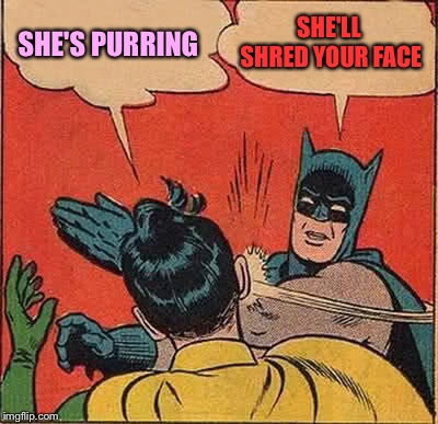 Batman Slapping Robin Meme | SHE'S PURRING SHE'LL SHRED YOUR FACE | image tagged in memes,batman slapping robin | made w/ Imgflip meme maker