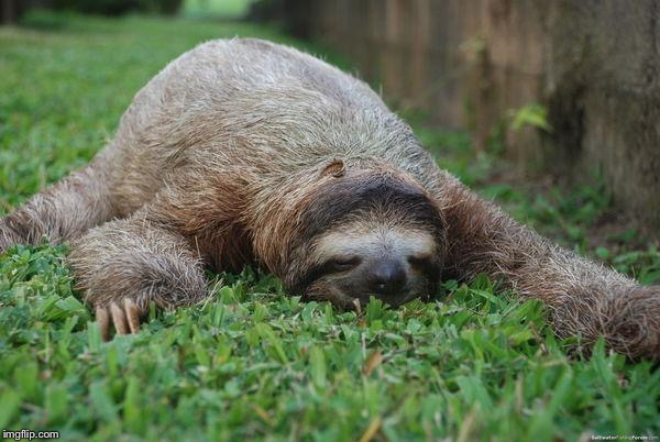 Sleeping sloth | . | image tagged in sleeping sloth | made w/ Imgflip meme maker