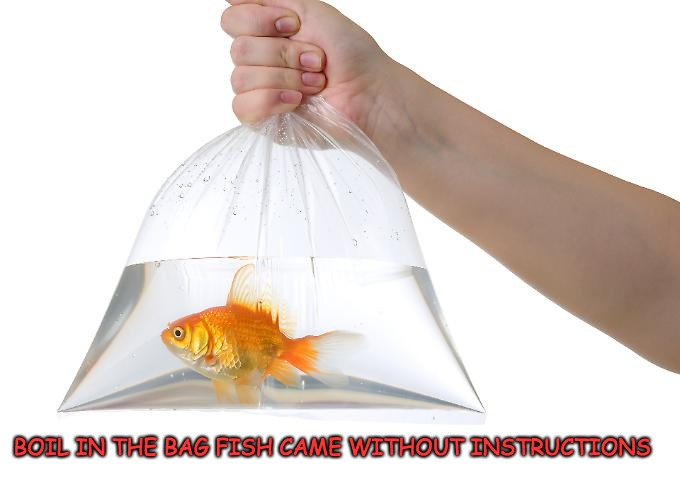 Comes without cooking instructions | BOIL IN THE BAG FISH CAME WITHOUT INSTRUCTIONS | image tagged in goldfish,daily cooking lesson | made w/ Imgflip meme maker