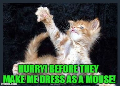 cats | HURRY! BEFORE THEY MAKE ME DRESS AS A MOUSE! | image tagged in cats | made w/ Imgflip meme maker
