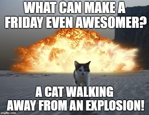 cat explosion | WHAT CAN MAKE A FRIDAY EVEN AWESOMER? A CAT WALKING AWAY FROM AN EXPLOSION! | image tagged in cat explosion | made w/ Imgflip meme maker