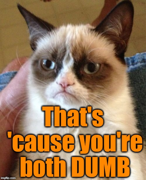 Grumpy Cat Meme | That's 'cause you're both DUMB | image tagged in memes,grumpy cat | made w/ Imgflip meme maker