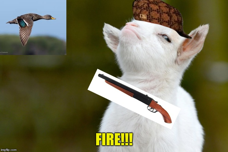 FIRE!!! | image tagged in proud baby goat,scumbag | made w/ Imgflip meme maker