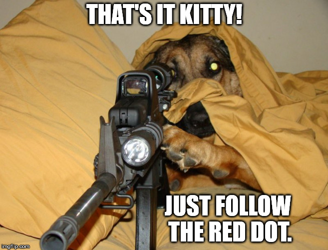 When you get tired of the cat taking over the place. | THAT'S IT KITTY! JUST FOLLOW THE RED DOT. | image tagged in memes,dog with rifle | made w/ Imgflip meme maker