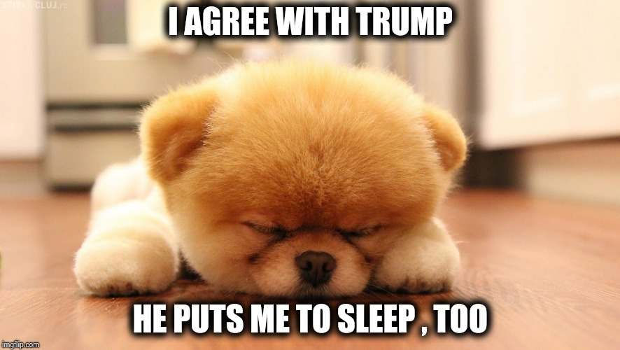 Sleeping dog | I AGREE WITH TRUMP HE PUTS ME TO SLEEP , TOO | image tagged in sleeping dog | made w/ Imgflip meme maker