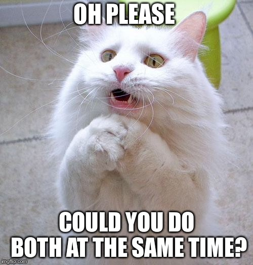 Begging Cat | OH PLEASE COULD YOU DO BOTH AT THE SAME TIME? | image tagged in begging cat | made w/ Imgflip meme maker