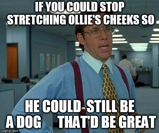 leave Ollie alone  |  IF YOU COULD STOP STRETCHING OLLIE'S CHEEKS SO; HE COULD  STILL BE A DOG      THAT'D BE GREAT | image tagged in memes,that would be great,ollie,cheeks,so,stretch | made w/ Imgflip meme maker