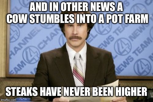 Ron Burgundy Meme | AND IN OTHER NEWS A COW STUMBLES INTO A POT FARM STEAKS HAVE NEVER BEEN HIGHER | image tagged in memes,ron burgundy | made w/ Imgflip meme maker
