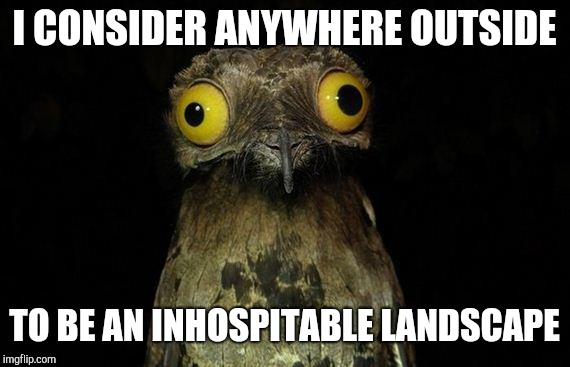 Weird Stuff I Do Potoo Meme | I CONSIDER ANYWHERE OUTSIDE TO BE AN INHOSPITABLE LANDSCAPE | image tagged in memes,weird stuff i do potoo | made w/ Imgflip meme maker