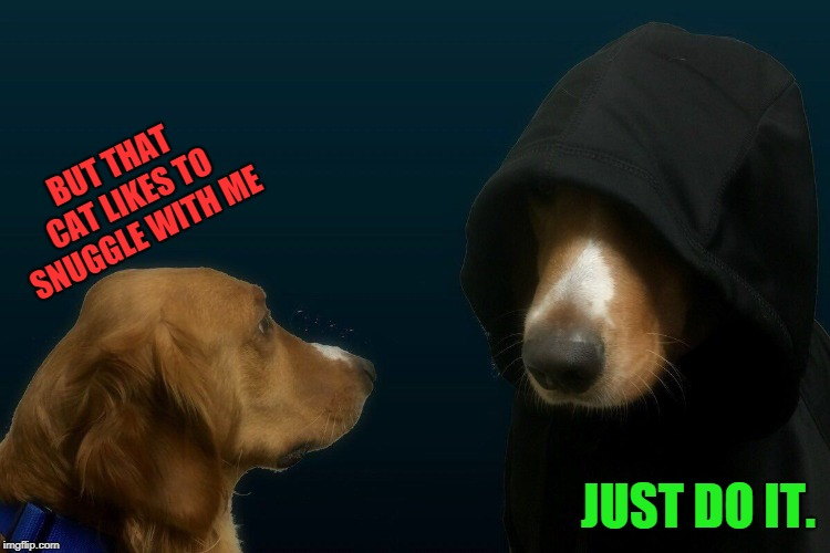 Evil dog | BUT THAT CAT LIKES TO SNUGGLE WITH ME JUST DO IT. | image tagged in evil dog | made w/ Imgflip meme maker