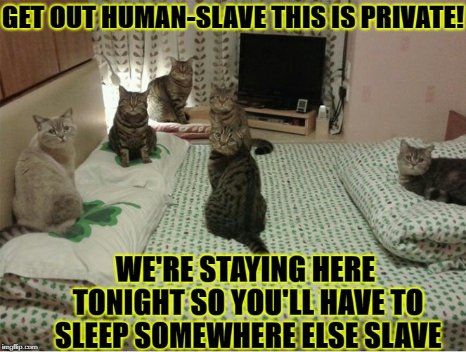 GET OUT HUMAN-SLAVE THIS IS PRIVATE! WE'RE STAYING HERE TONIGHT SO YOU'LL HAVE TO SLEEP SOMEWHERE ELSE SLAVE | image tagged in bed thieves | made w/ Imgflip meme maker