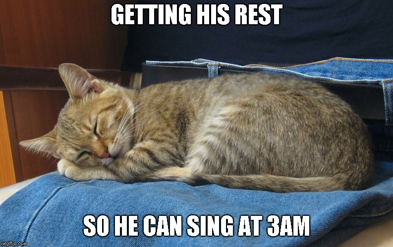 3am singer | GETTING HIS REST SO HE CAN SING AT 3AM | image tagged in cat,howling at 3am | made w/ Imgflip meme maker