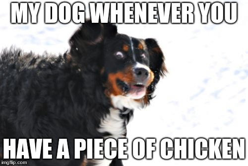 Crazy Dawg | MY DOG WHENEVER YOU HAVE A PIECE OF CHICKEN | image tagged in memes,crazy dawg | made w/ Imgflip meme maker
