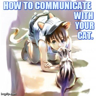Sometimes Everyone Needs Special Attention | HOW TO COMMUNICATE WITH YOUR  CAT. | image tagged in memes,girl,how to,communication,with,cat | made w/ Imgflip meme maker