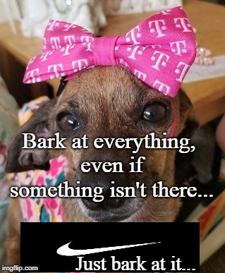 Just bark at it... |  Bark at everything, even if something isn't there... Just bark at it... | image tagged in bark,everything,something,dog | made w/ Imgflip meme maker