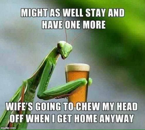 Make My Next Drink A Grasshopper | image tagged in praying mantis,beer,wife | made w/ Imgflip meme maker