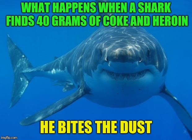 Straight White Shark | WHAT HAPPENS WHEN A SHARK FINDS 40 GRAMS OF COKE AND HEROIN HE BITES THE DUST | image tagged in straight white shark | made w/ Imgflip meme maker
