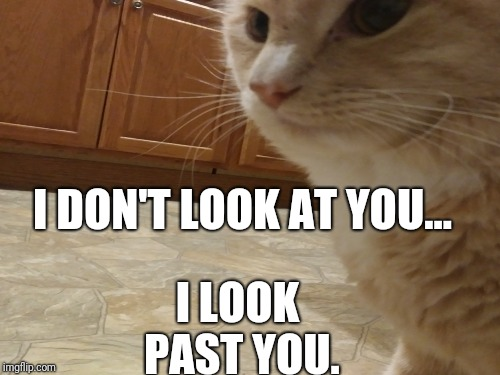 Motivation | I DON'T LOOK AT YOU... I LOOK PAST YOU. | image tagged in cats,staring,motivation,focus | made w/ Imgflip meme maker
