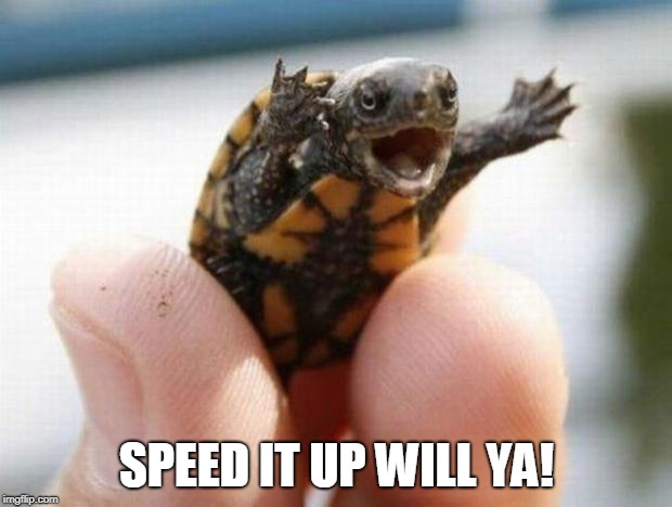 happy baby turtle | SPEED IT UP WILL YA! | image tagged in happy baby turtle | made w/ Imgflip meme maker