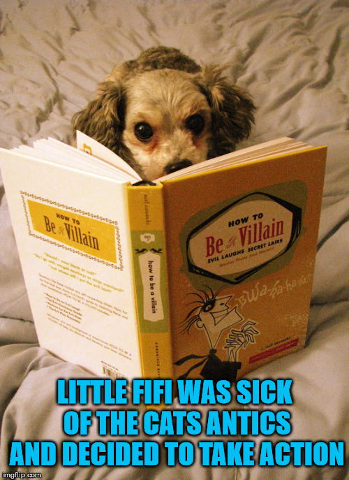 Looks like the dog will become more like a cat ... they are evil. |  LITTLE FIFI WAS SICK OF THE CATS ANTICS AND DECIDED TO TAKE ACTION | image tagged in memes,cats and dogs,dogs,reading,villain,funny | made w/ Imgflip meme maker
