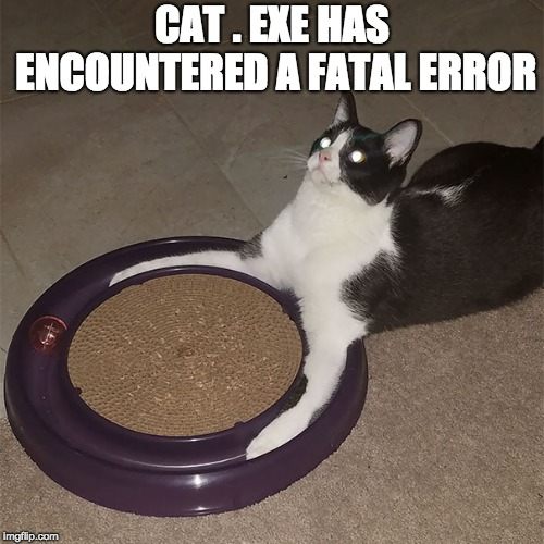 Cat.exe has encountered a fatal error | CAT . EXE HAS ENCOUNTERED A FATAL ERROR | image tagged in cat,error,windows xp,wtf,weird | made w/ Imgflip meme maker