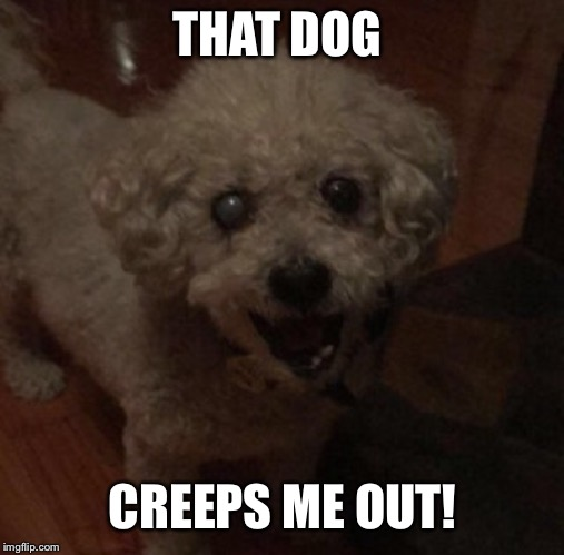 THAT DOG CREEPS ME OUT! | made w/ Imgflip meme maker