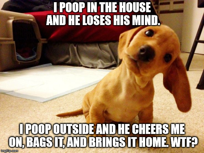 How to confuse a puppy. | I POOP IN THE HOUSE AND HE LOSES HIS MIND. I POOP OUTSIDE AND HE CHEERS ME ON, BAGS IT, AND BRINGS IT HOME. WTF? | image tagged in memes,puppy | made w/ Imgflip meme maker