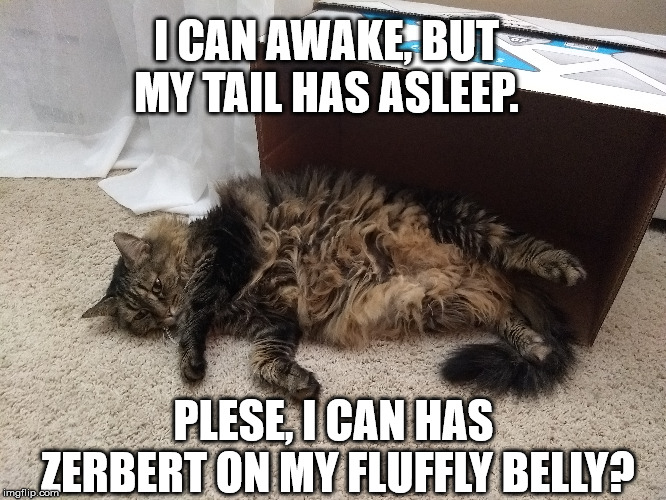Schrödinger's Cat? | PLESE, I CAN HAS ZERBERT ON MY FLUFFLY BELLY? I CAN AWAKE, BUT MY TAIL HAS ASLEEP. | image tagged in schrodinger,cat,box | made w/ Imgflip meme maker