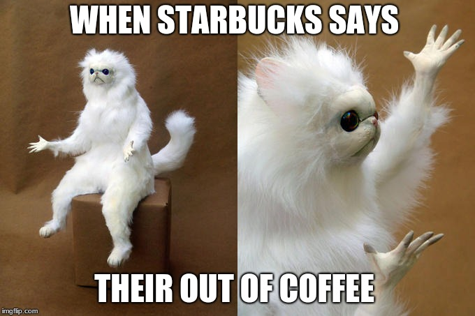 Persian Cat Room Guardian | WHEN STARBUCKS SAYS THEIR OUT OF COFFEE | image tagged in memes,persian cat room guardian | made w/ Imgflip meme maker