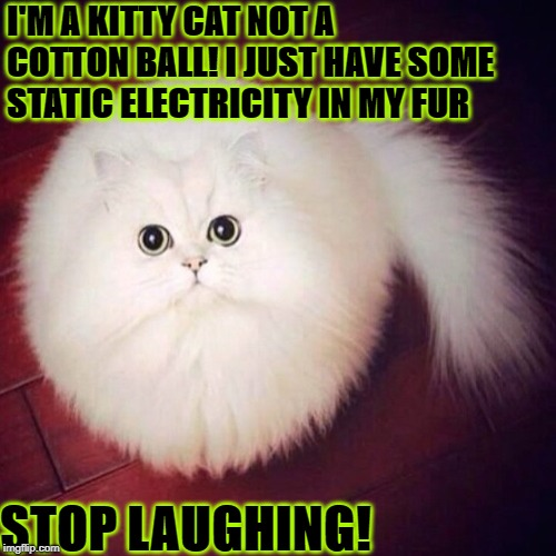 I'M A KITTY CAT NOT A COTTON BALL! I JUST HAVE SOME STATIC ELECTRICITY IN MY FUR STOP LAUGHING! | image tagged in cotton kitty | made w/ Imgflip meme maker
