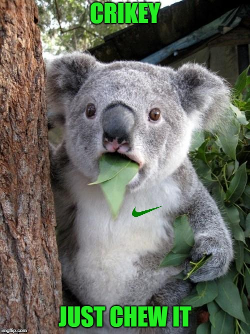Meanwhile Downunder | CRIKEY JUST CHEW IT | image tagged in memes,surprised koala,nike,nike swoosh,protest | made w/ Imgflip meme maker