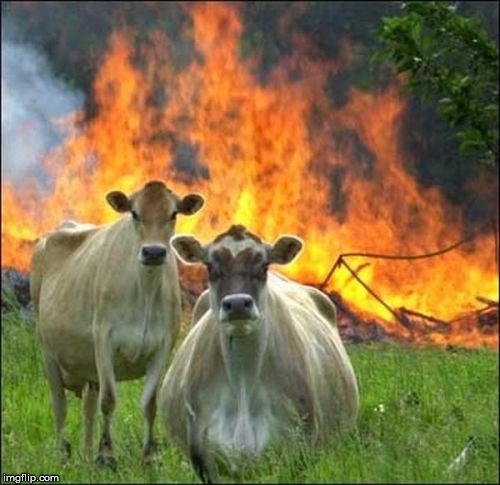 Evil Cows Meme | image tagged in memes,evil cows | made w/ Imgflip meme maker