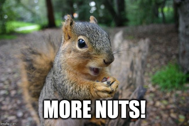 MORE NUTS! | made w/ Imgflip meme maker