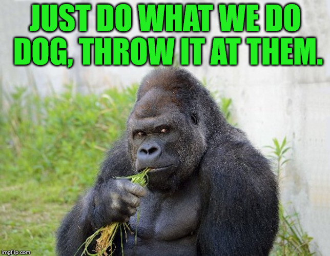 sexy monkey,memes,gorilla | JUST DO WHAT WE DO DOG, THROW IT AT THEM. | image tagged in sexy monkey memes gorilla | made w/ Imgflip meme maker