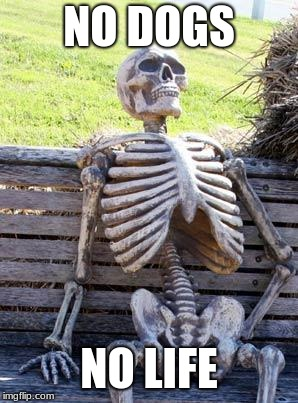 Waiting Skeleton Meme | NO DOGS NO LIFE | image tagged in memes,waiting skeleton | made w/ Imgflip meme maker