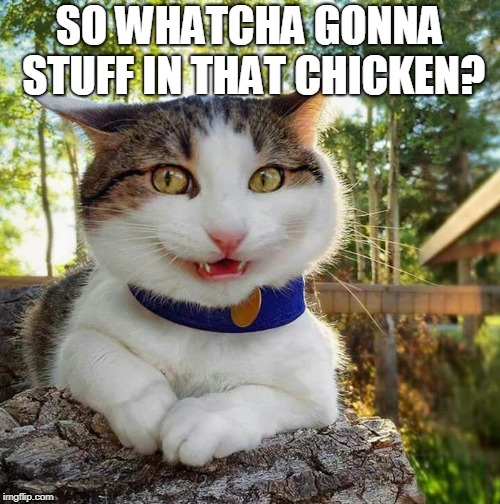 Cat Say What? | SO WHATCHA GONNA STUFF IN THAT CHICKEN? | image tagged in cat say what | made w/ Imgflip meme maker
